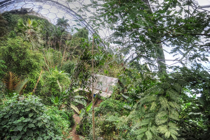 Rainforest Biome in the Eden Project