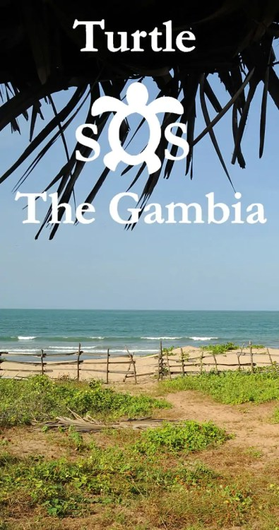 Turtle SOS The Gambia - follow the link to discover more