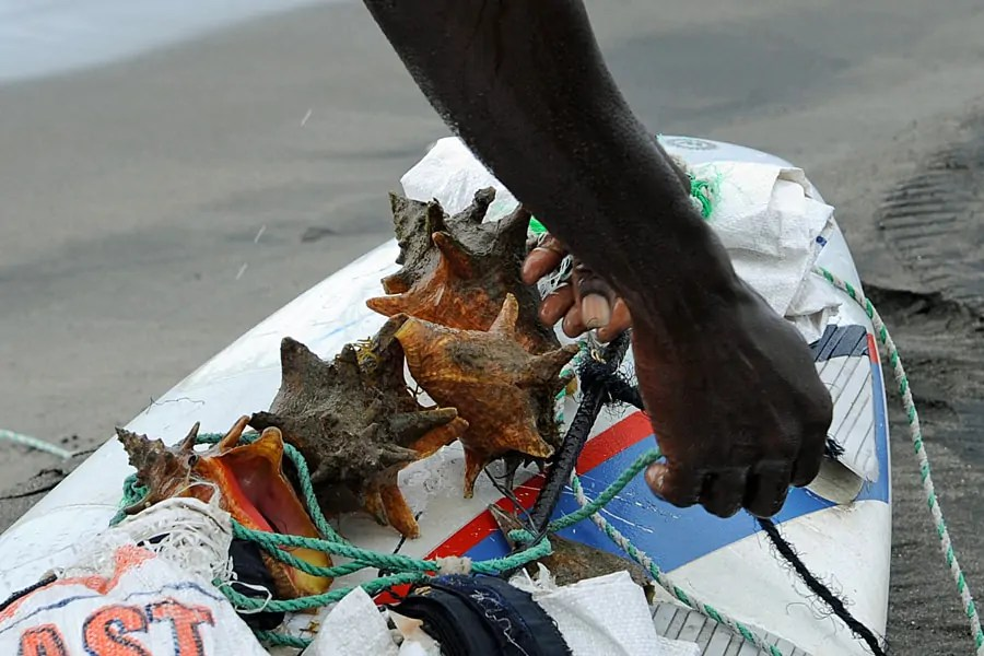 A fisherman brings in his catch of conches, St Kitts