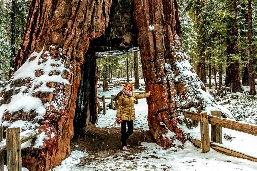 Mariposa Grove, Yosemite, USA