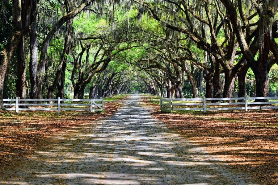 Wormsloe Plantation, Savannah, USA