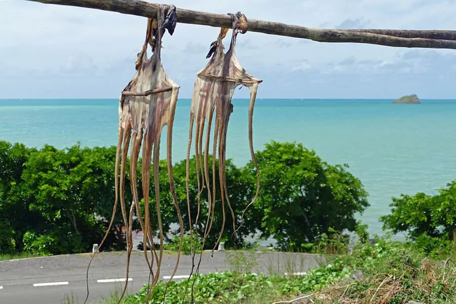 Octopus drying in the sunshine of Rodrigues Island, Mauritius