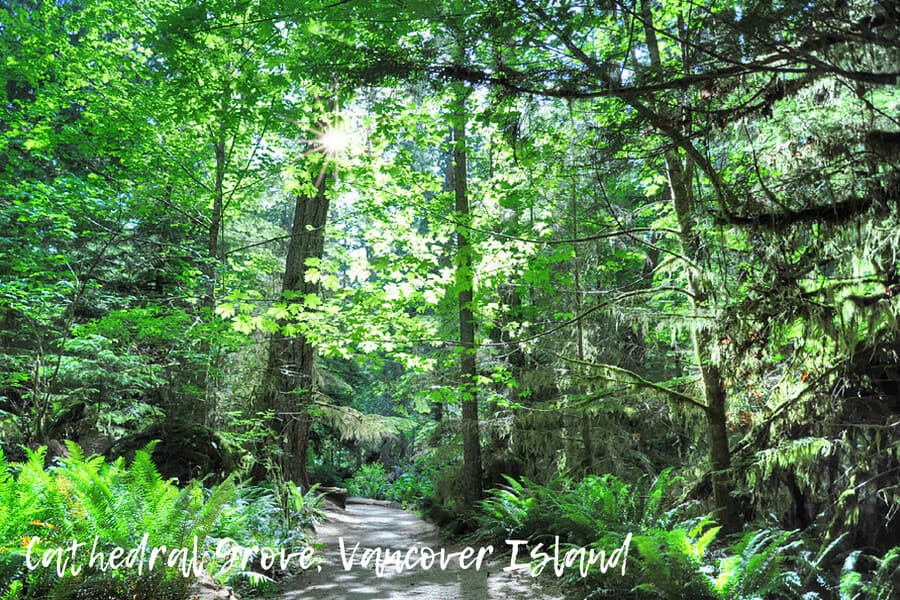 Cathedral Grove, Vancover Island, British Columbia
