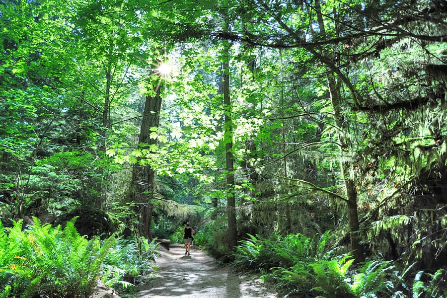 Cathedral Grove by Kathryn Burrington
