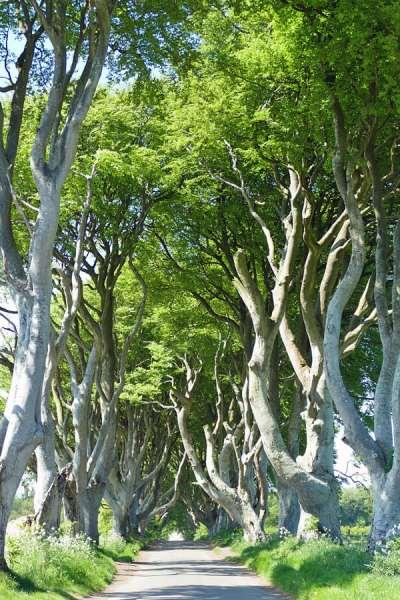 The Dark Hedges, Co. Antrim | Kingsroad, King's Landing | Game of Thrones tours