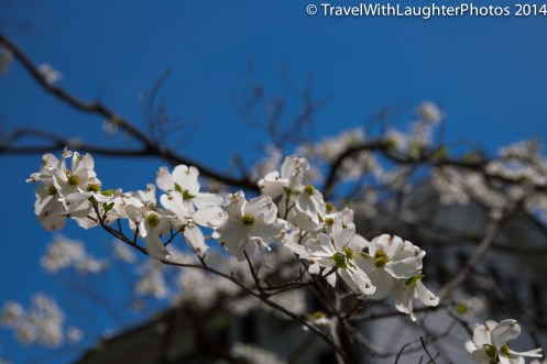 Doylestown Spring Flowers 2014-1199