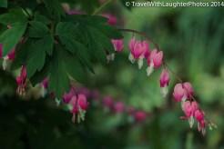 Doylestown Spring Flowers 2014-1205