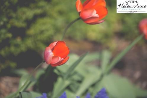 Doylestown Spring 2015-4674-16