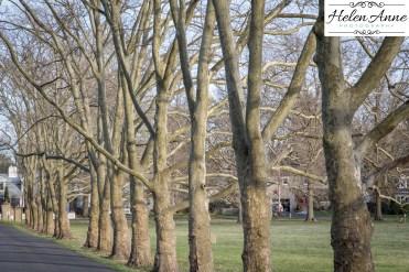 Doylestown Photo walk-8809
