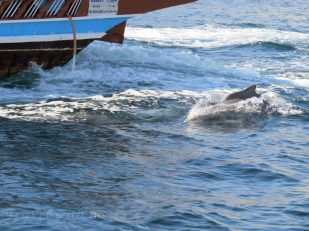 dolphins with our cruise