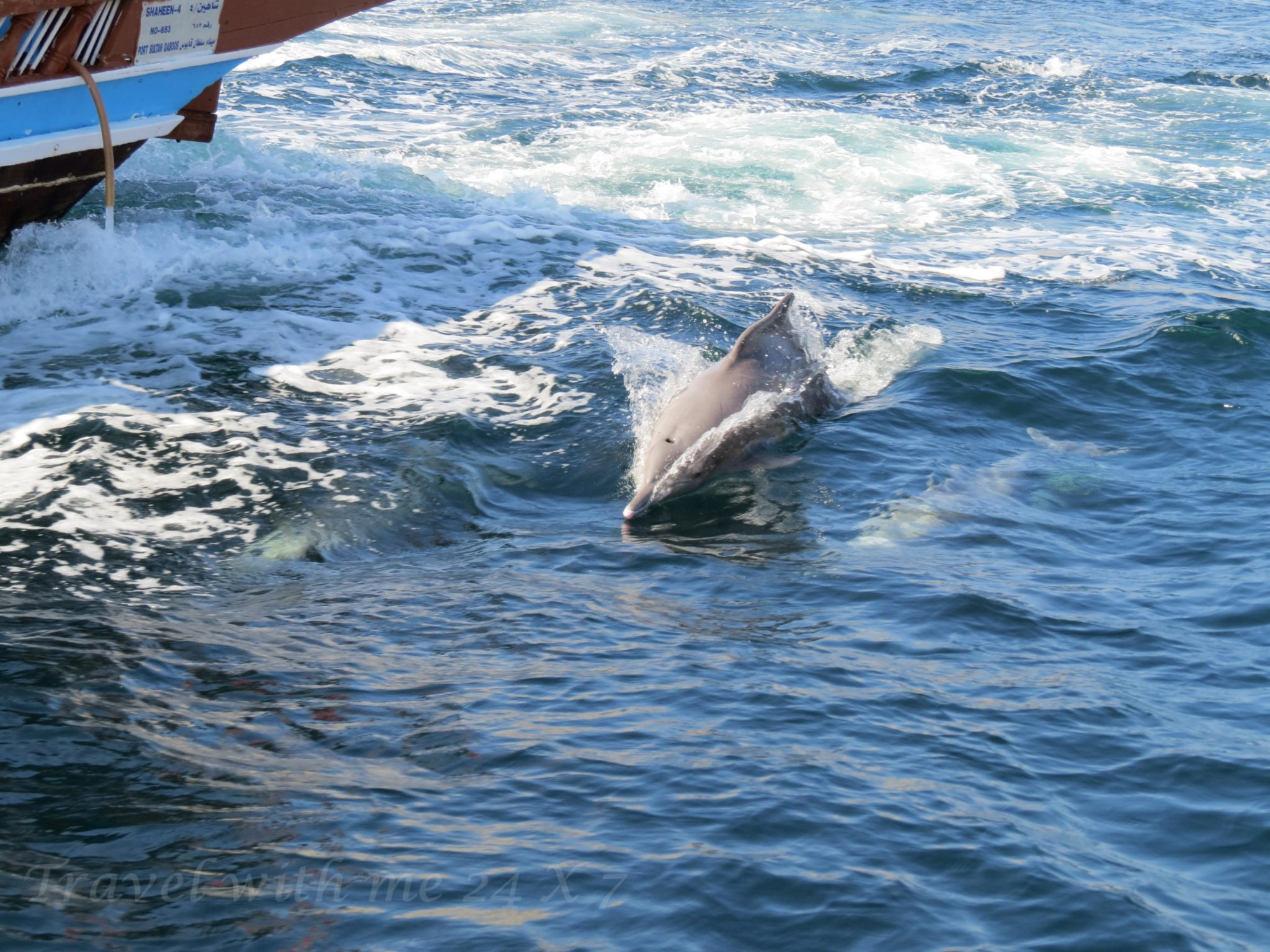 dolphin coming out