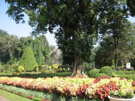Glimpses of Royal Botanical garden
