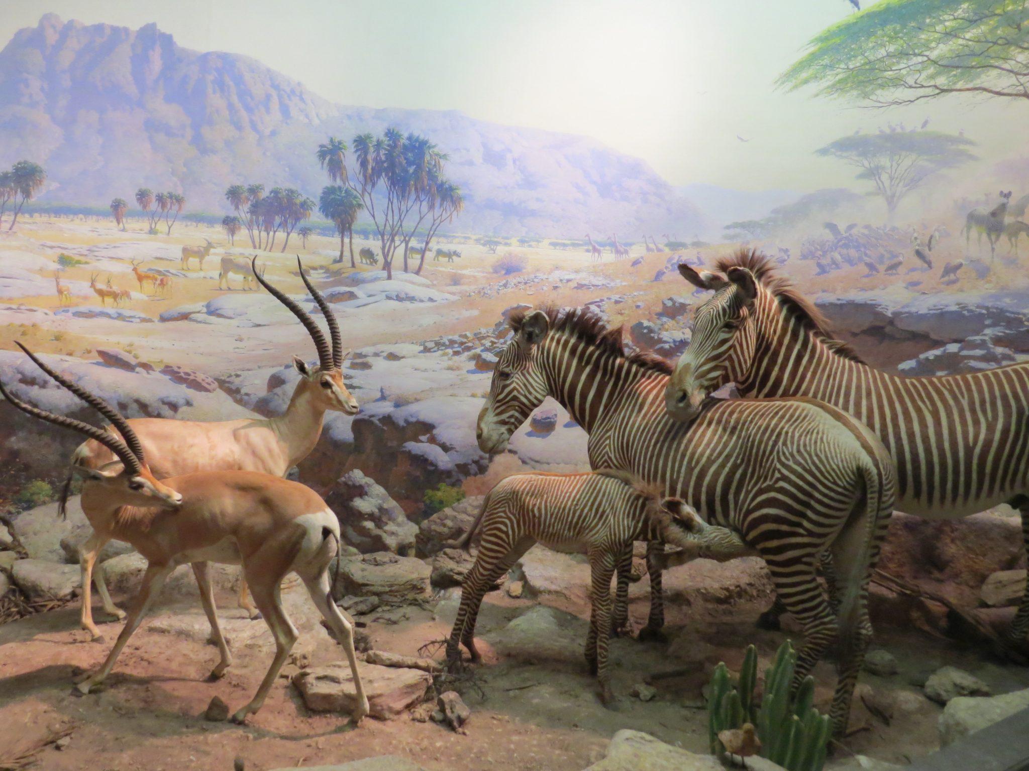 inside history museum