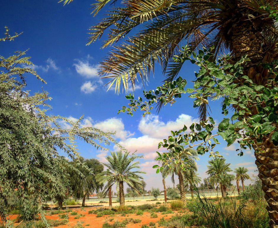 Explore Mleiha Archaeological Site