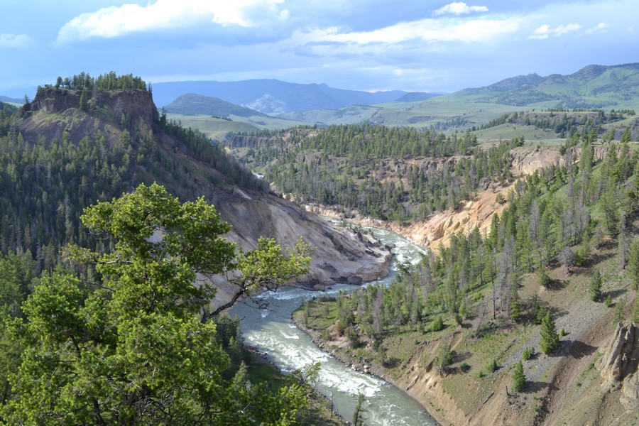 Vue sur le canyon du Yellowstone National Park