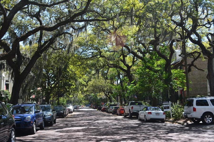 Allée de chênes Nouvelle Orléans