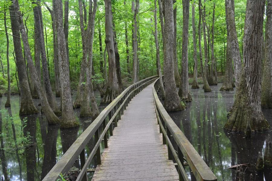 Photo marecage Mississippi - Sud des Etats-Unis