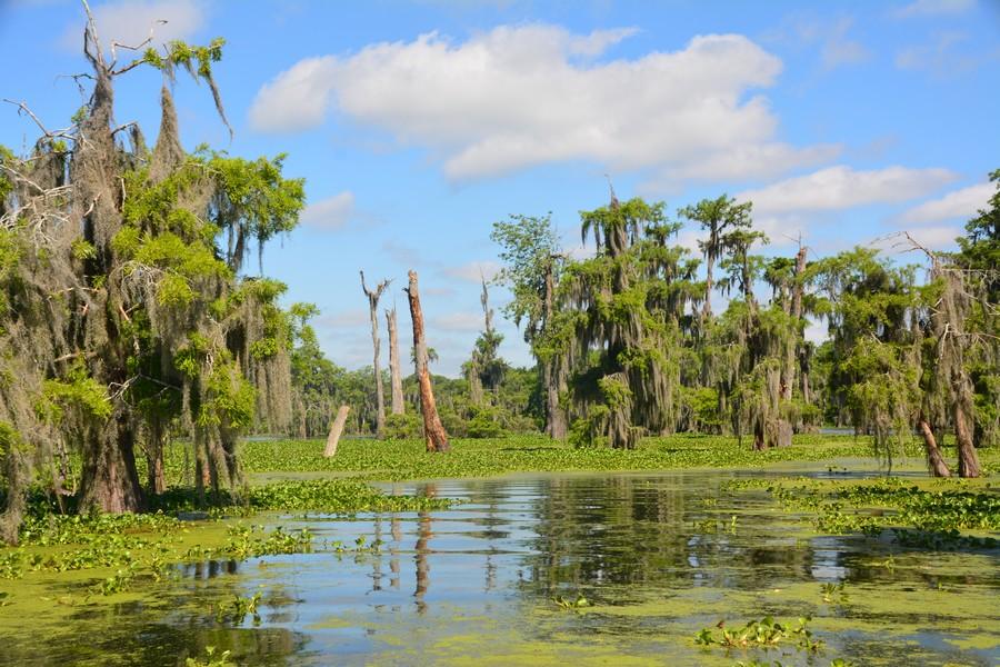 8 Lake Martin LeBlanc 50 - Que voir en Louisiane