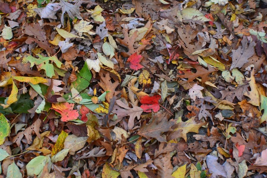 DSC 0271 - L'automne aux Etats-Unis