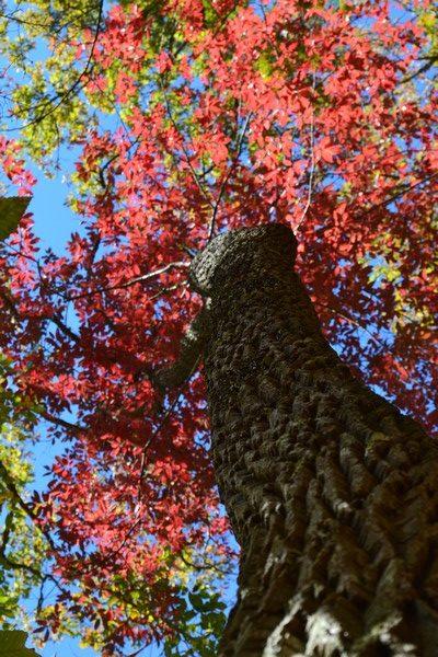DSC 0405 rotated - L'automne aux Etats-Unis
