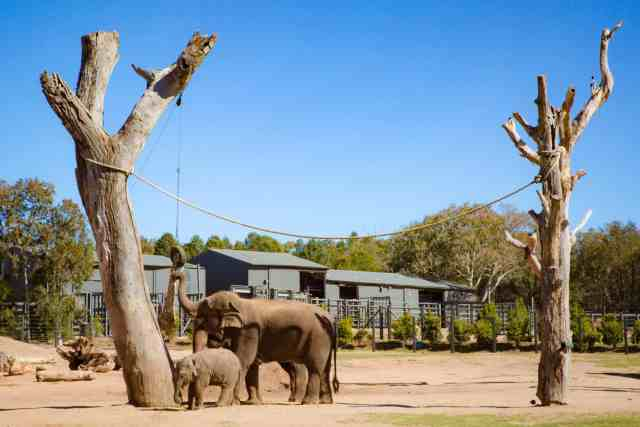 Travel With Meraki- Taronga Western Plains Zoo Dubbo Australia Asian Elephant