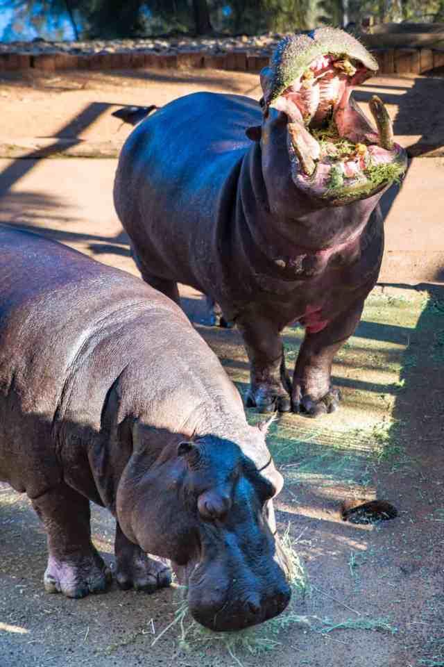Travel With Meraki- Taronga Western Plains Zoo Dubbo Australia Zoofari Lodge Behind The Scenes Tour