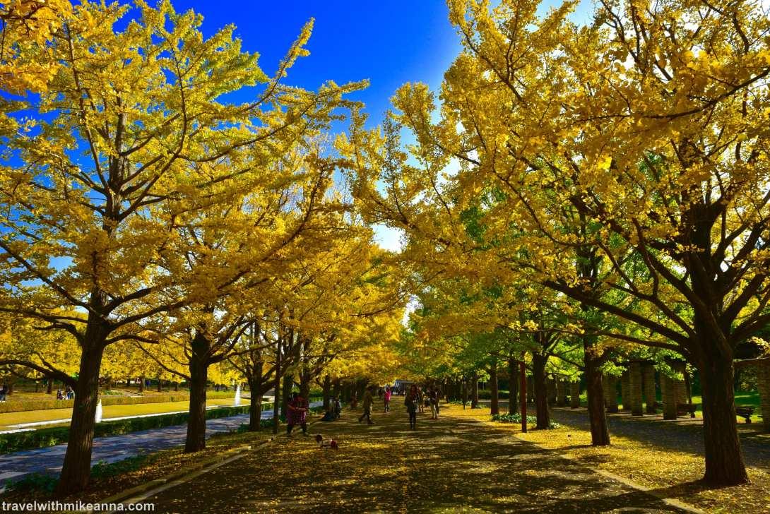 【東京 Tokyo 】昭和紀念公園賞楓