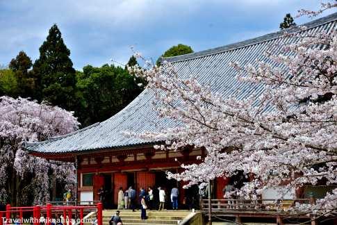 京都 鵜鶘寺