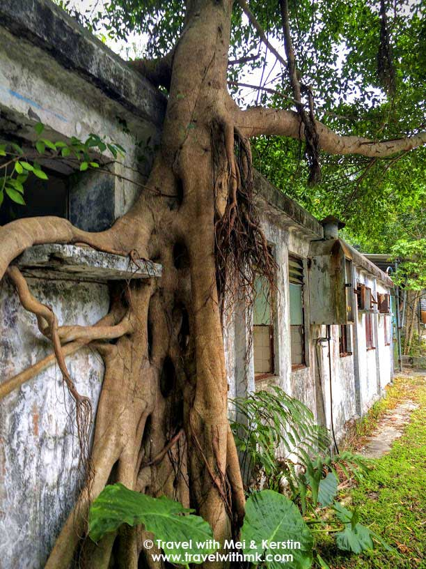 Banyan roots grown inside an abandoned warehouse, Lantau Island, Hong Kong © TravelwithMK.com