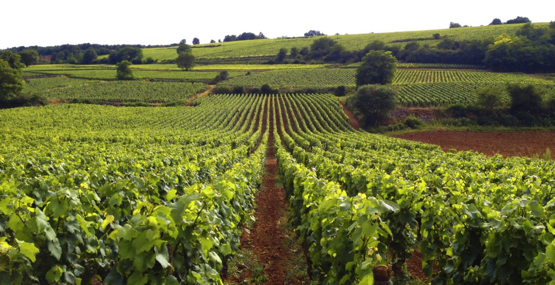 Vineyards in Burgundy, France © Travelwithmk.com