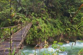Hiking through the jungle in Ecuador