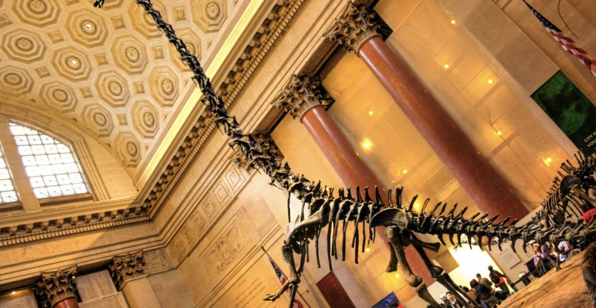 Exploring the American Museum of Natural History in NY