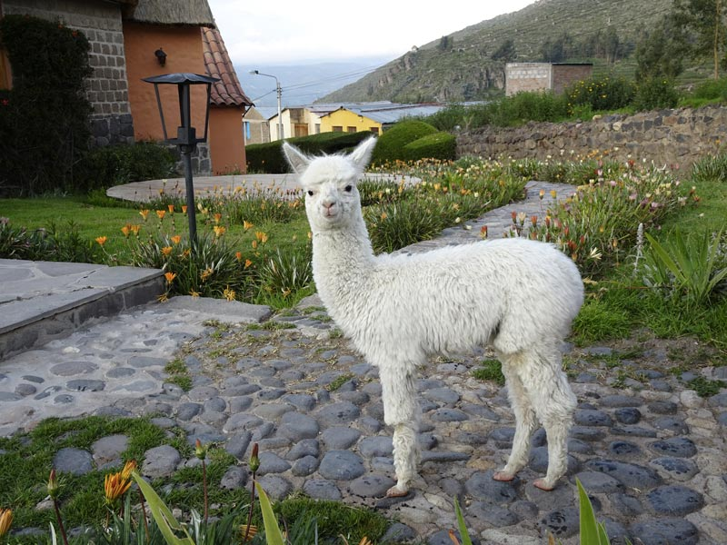 Mama Yacchi Hotel in Colca Canyon Photo by Vicky from Spud on the Run