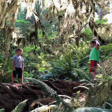 Rainforest Fun: Things to Do with Kids in the Quinault River Valley