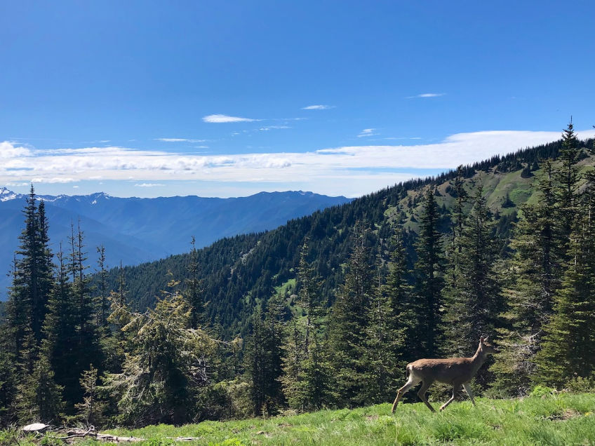 Hurricane Ridge Trails