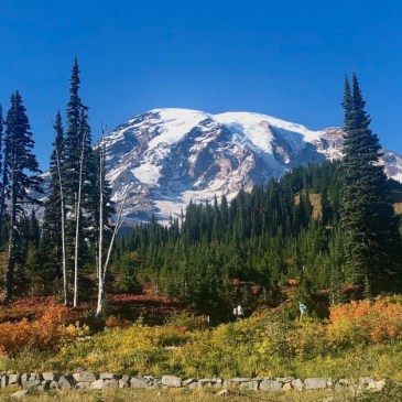 Things to Do in One Day at Mt. Rainier National Park