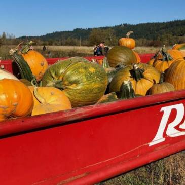 The Best Pumpkin Patches and Corn Mazes Near Seattle and Tacoma