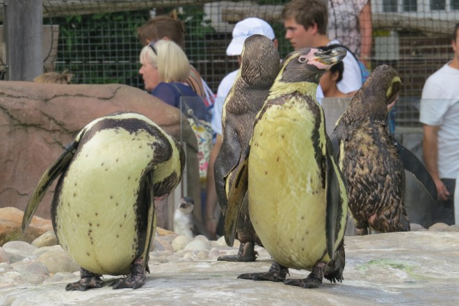 גן החיות של לונדון