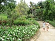 הגנים הבוטנים של המלכה סיריקיט ליד צ'יאנג מאי