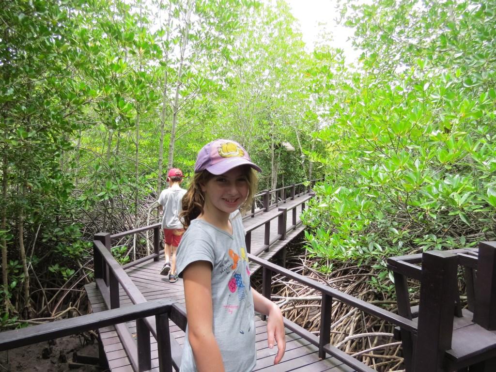 שמורת המנגרובים בפרנאבורי