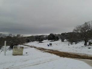 שלג ביער אודם