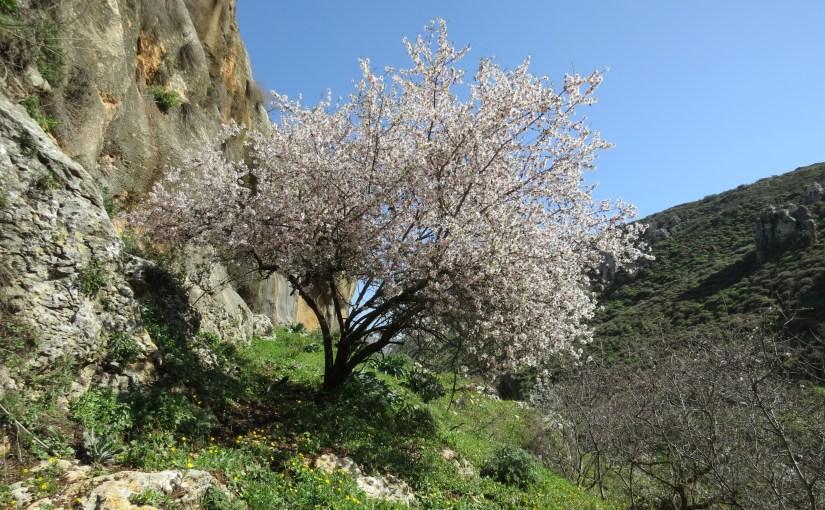 נחל אביב: עלמות ושקדיות