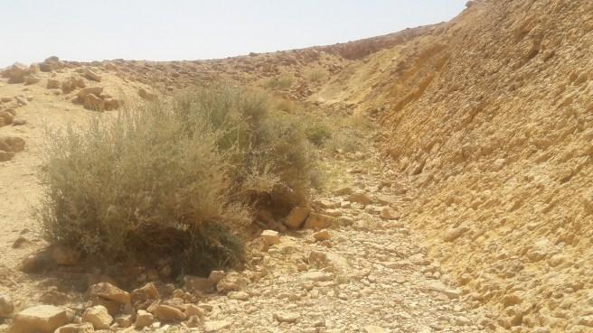 קיר האמוניטים במכתש רמון