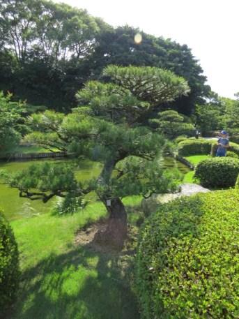 הגן היפני בפארק אוהורי בפוקואוקה