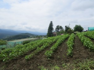 בעמק קיסו ממגומה לצומאגו