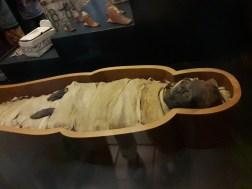 מומיה במוזיאון הותיקן