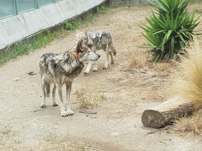 גן החיות בסן פרנסיסקו