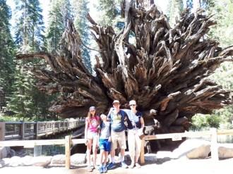 בשמורת עצי הסקויה מריפוסה גרוב
