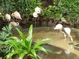 פלמינגו בפארק המים טרופיקל איילנדס