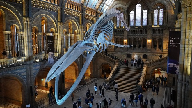 natural-history-museum-4587057_1920